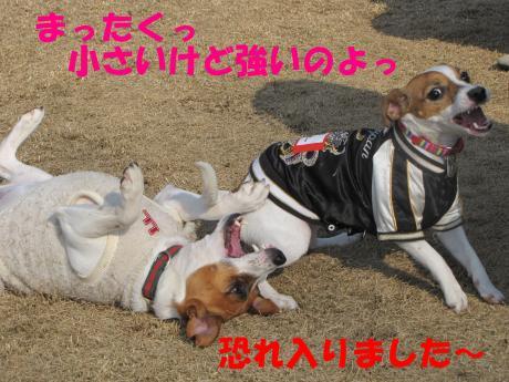 縺ォ繧薙§繧・4_convert_20100204224947[1]