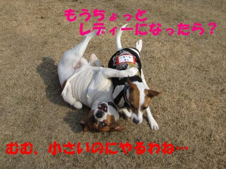 縺ォ繧薙§繧・2_convert_20100204224849[1]