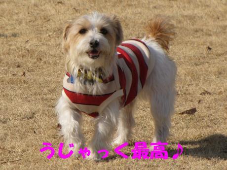 繝ゥ繧ケ繝・3_convert_20100207224030[1]