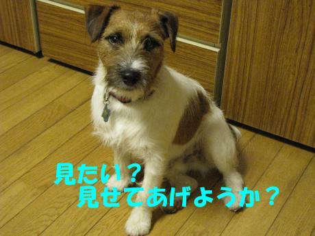 縺斐m繧・_convert_20100228224240[1]