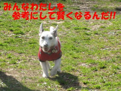 縺励▽縺・2_convert_20100314220117[1]