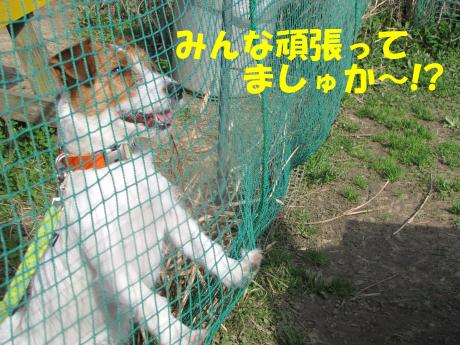 縺励▽縺・_convert_20100314215940[1]