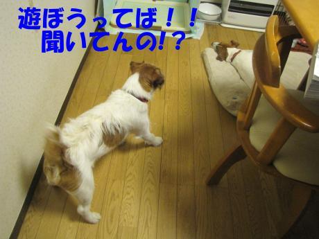 諤ェ謌・_convert_20100329221820[1]