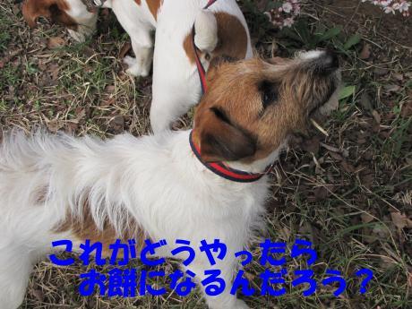 譯・_convert_20100405224615[1]