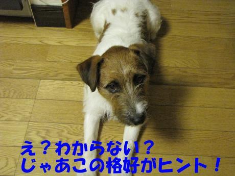 繧ォ繝・ヨ2_convert_20100408231508[1]