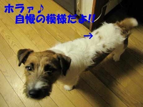 繧ォ繝・ヨ3_convert_20100408231530[1]