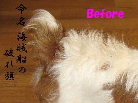 繧ォ繝・ヨ6_convert_20100408231636[1]