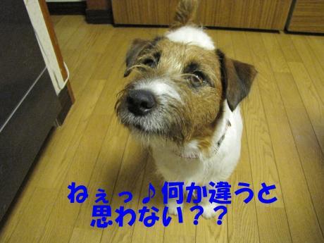 繧ォ繝・ヨ1_convert_20100408231442[1]
