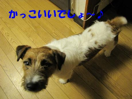 繧ォ繝・ヨ8_convert_20100408231722[1]