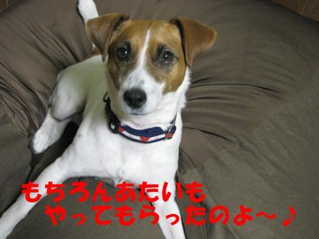 繧ォ繝・ヨ9_convert_20100408231757[1]