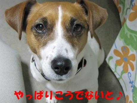 繧ォ繝・ヨ14_convert_20100408231949[1]