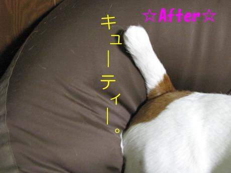 繧ォ繝・ヨ13_convert_20100408231922[1]