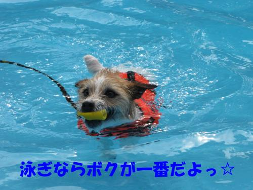 繝励・繝ォ6_convert_20100516224906[1]