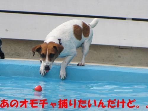 繝励・繝ォ4_convert_20100516224826[1]