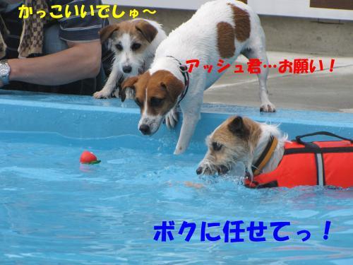 繝励・繝ォ5_convert_20100516224846[1]