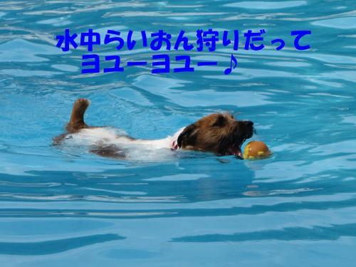 繝励・繝ォ2_convert_20100516224809[1]