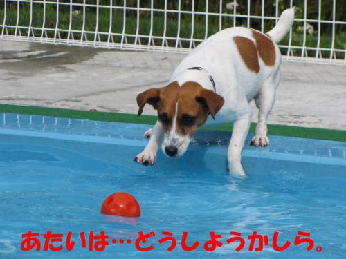 繝励・繝ォ3_convert_20100516224741[1]