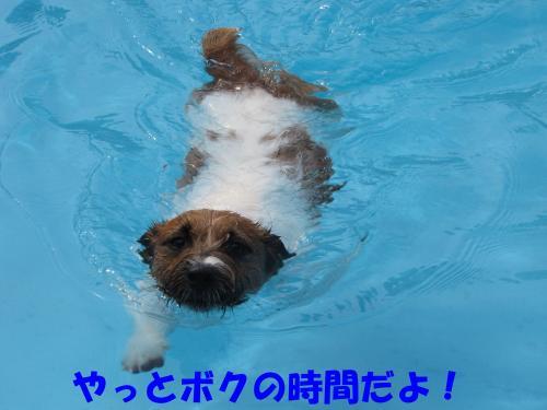 繝励・繝ォ1_convert_20100516224702[1]