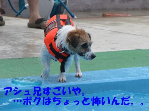 繝励・繝ォ8_convert_20100516225009[1]