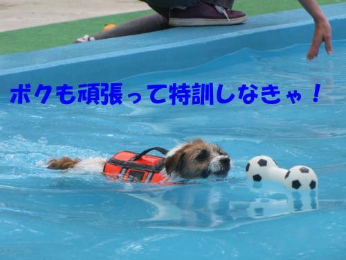 繝励・繝ォ9_convert_20100516225032[1]