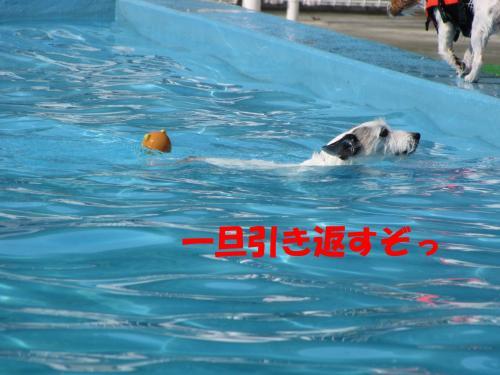 繝励・繝ォ12_convert_20100516225209[1]