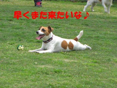 繝励・繝ォ16_convert_20100516225341[1]