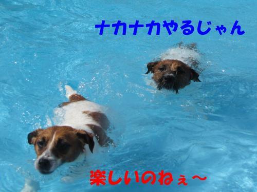 繝励・繝ォ15_convert_20100516225318[1]