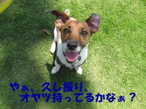 縺・§繧・▲縺・_convert_20100606214441[1]