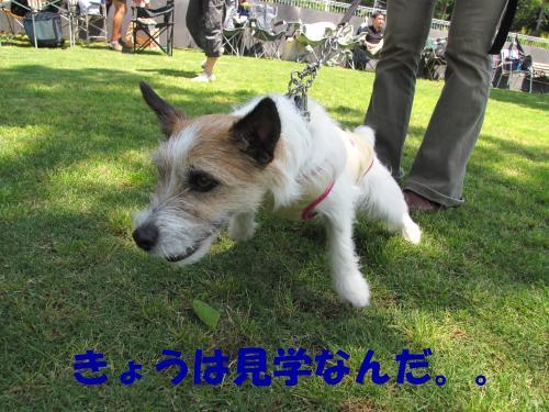 縺・§繧・▲縺・_convert_20100606214419[1]