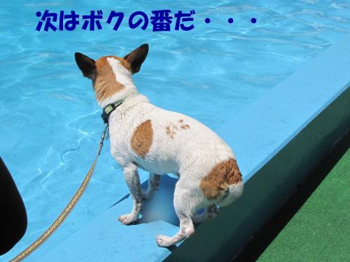 繝励・繝ォ6_convert_20100615215606[1]