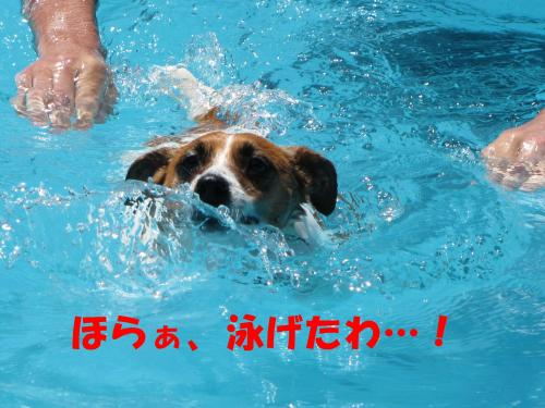 繝励・繝ォ5_convert_20100615215544[1]