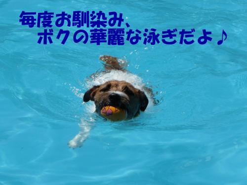 繝励・繝ォ1_convert_20100615215421[1]