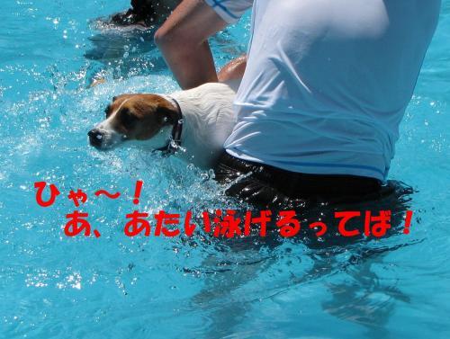 繝励・繝ォ3_convert_20100615215459[1]