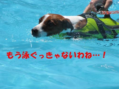 繝励・繝ォ12_convert_20100615215800[1]