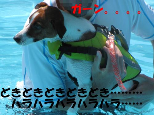 繝励・繝ォ11_convert_20100615215741[1]
