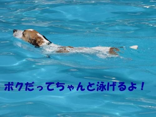 繝励・繝ォ9_convert_20100615215702[1]
