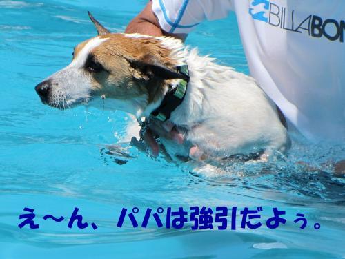 繝励・繝ォ8_convert_20100615215642[1]