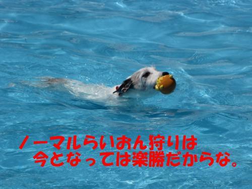 繝励・繝ォ17_convert_20100615215956[1]