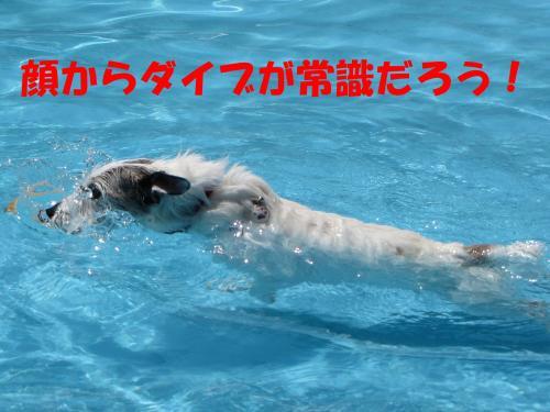 繝励・繝ォ15_convert_20100615215907[1]