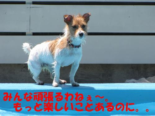 繝励・繝ォ13_convert_20100615215820[1]