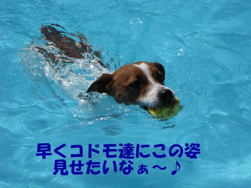 繝励・繝ォ19_convert_20100615220039[1]