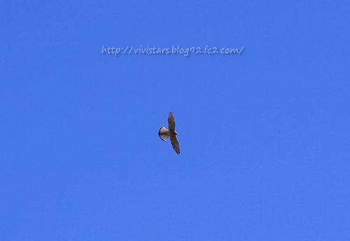 鷹科の鳥さん