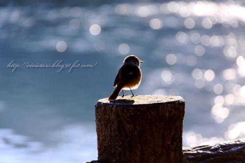冬の湖キラキラ