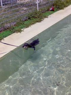 泳いでます1