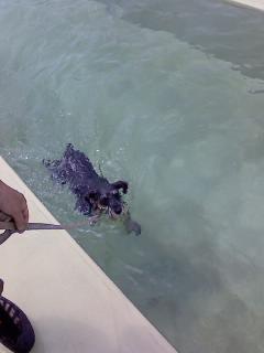 泳いでます2