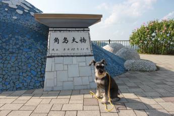 角島ウオッカ
