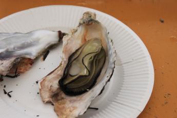 牡蠣小屋5
