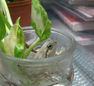 211122_frog1.jpg