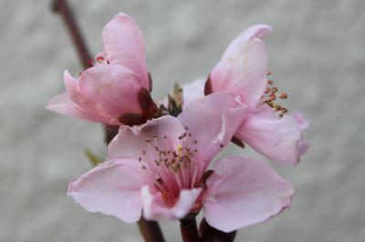 20100331-春は、音穏の季節!? 8