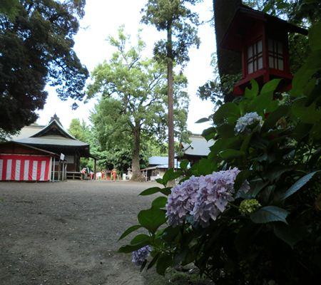 saitama washimiya jinjya 03 20110625_R